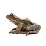 Tree Frog Looking Left   14/100
