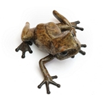 Common FrogLooking Left   11/100